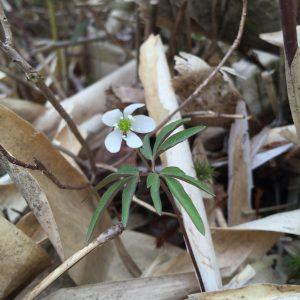 野反湖の花