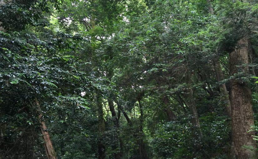 森林セラピー2 河村城址・酒水の滝コース