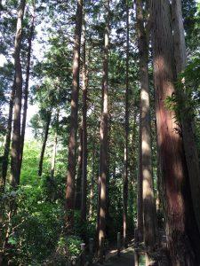 ヒルトン小田原 森林浴