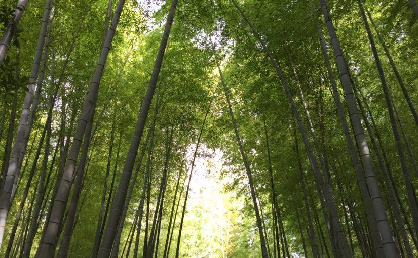 根府川3 ヒルトン小田原の森林浴
