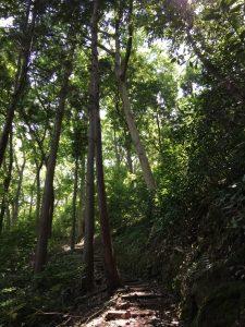 伊豆長岡 源氏山公園
