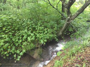 嬬恋村バラギ湖