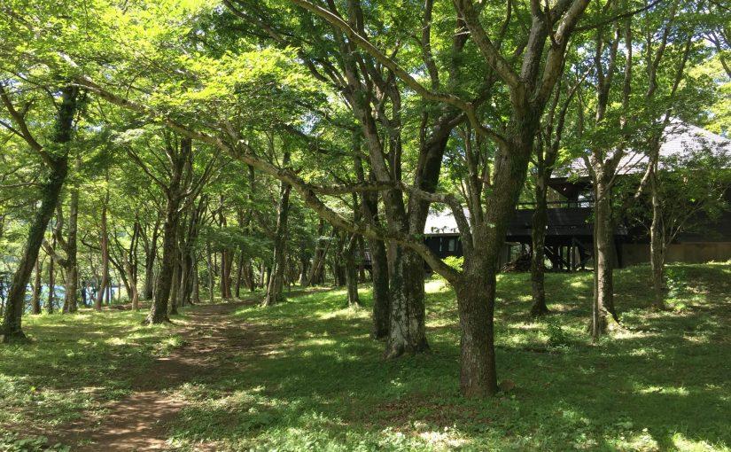 箱根桃源台 芦ノ湖キャンプ村周辺散策で森と芦ノ湖に癒される