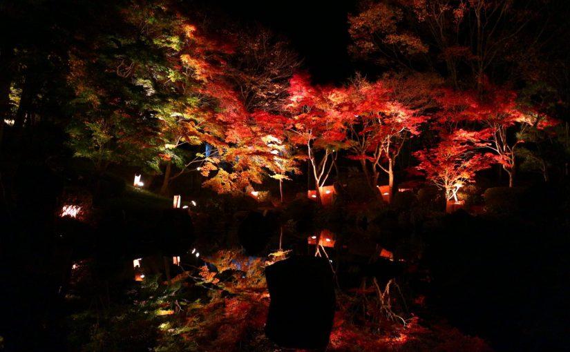 湘南大磯 城山公園-紅葉ライトアップ11月23日〜27日
