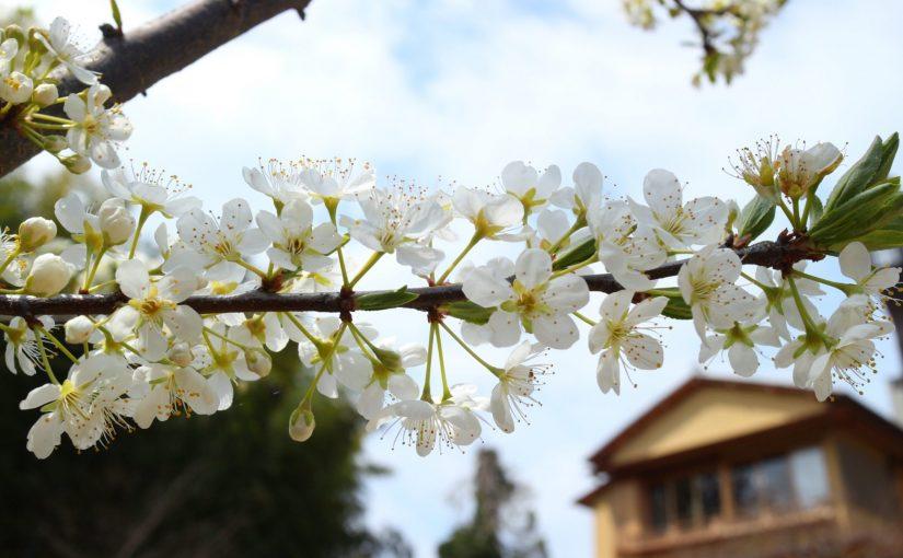 大磯旧吉田茂邸 再建、4月1日より一般公開。お庭をお散歩してきました。