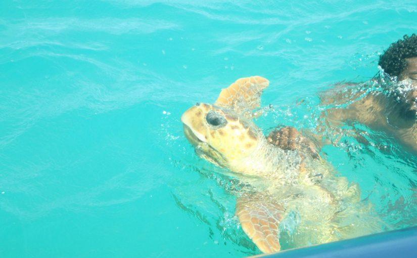 ノカンウイ島ツアー-ウミガメさんとBrosse島ランチとシュノーケリング-ニューカレドニア旅行記