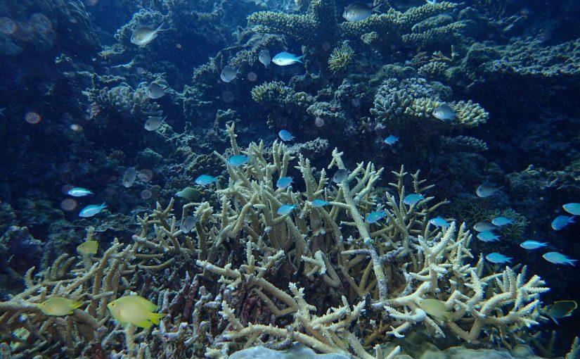 イルデパン島で体験ダイビング 防水カメラ オリンパスのTG-4 Toughを握って海の中へ-ニューカレドニア旅行記