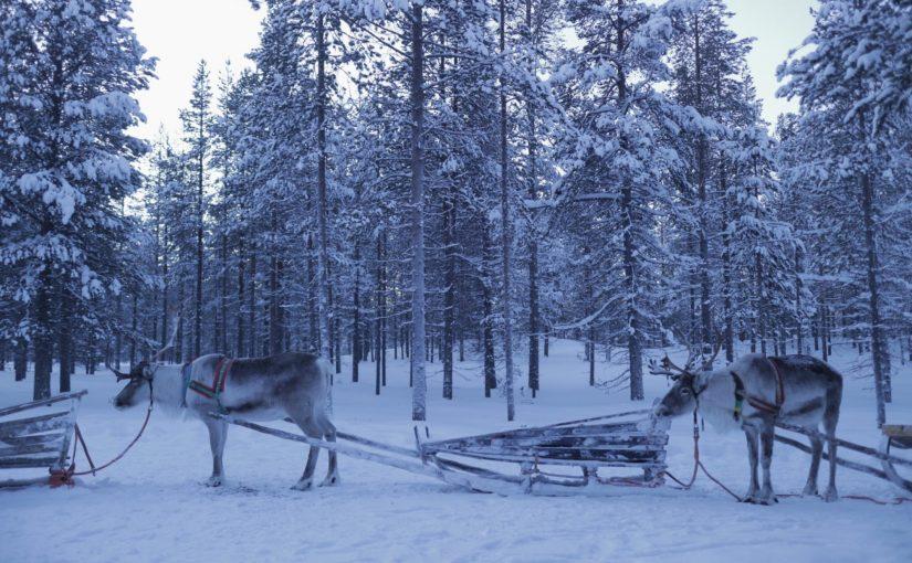 サーリセルカでトナカイそり体験-フィンランド旅行記